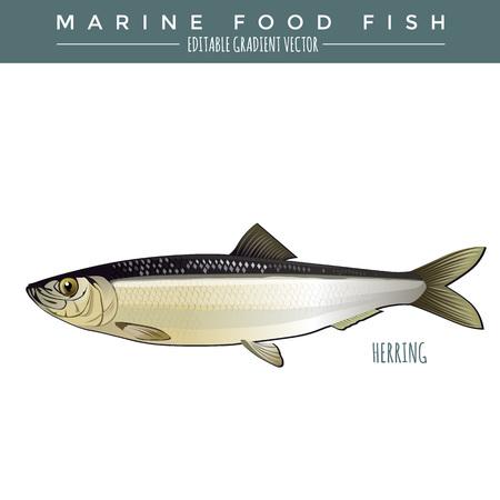 illustrazione Herring. pesce alimentare marina, gradiente vettoriale modificabile.