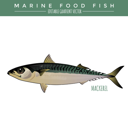 Mackerel illustration. Marine food fish, editable gradient vector.