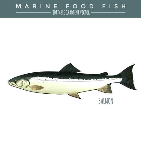 Salmon illustration. Marine food fish, editable gradient vector.