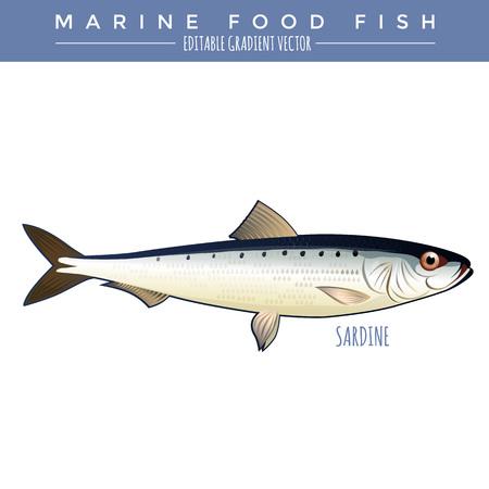 Sardine illustration. Marine food fish, editable gradient vector. Illustration
