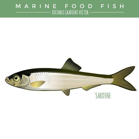 Sardine illustrazione. pesce alimentare marina, gradiente vettoriale modificabile.