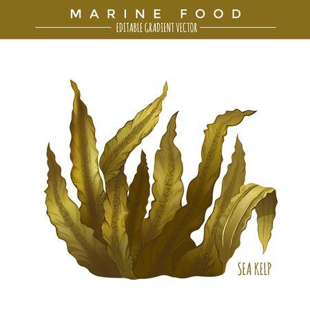kelp: Sea Kelp. Marine food, editable gradient vector.