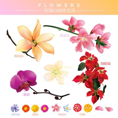 Flowers mesh gradient vector illustration on a white background.