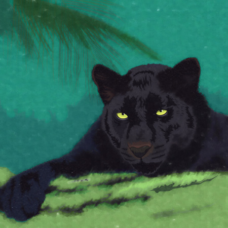 black panther: Wild cats in the habitat. Black Panther Stock Photo