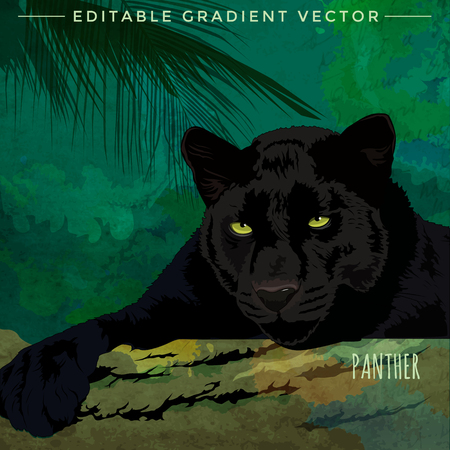 Wild cats in the habitat. Black Panther Illustration