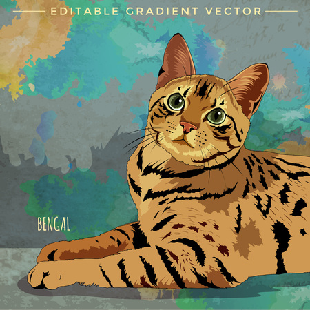 bengal: Bengal Cat. Vector illustration of a cat at home. Illustration