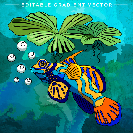 mollienesia: Fish in aquarium. Bright colorful vector illustration. Illustration