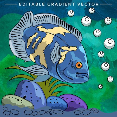 danio rerio: Fish in aquarium. Bright colorful vector illustration. Illustration
