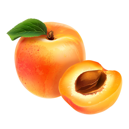 Apricot with leaves. Isolated illustration on white background. Stock Photo