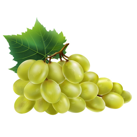 White grapes with leaves. Isolated illustration on white background.
