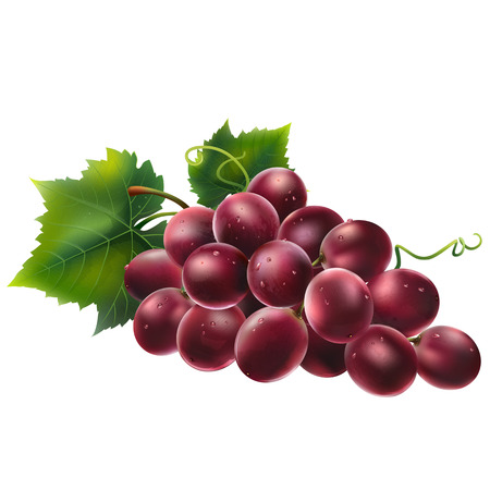 Red grapes with leaves. Isolated illustration on white background.