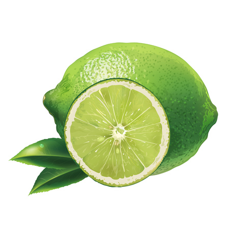 lime: Lime with leaves. Isolated illustration on white background.