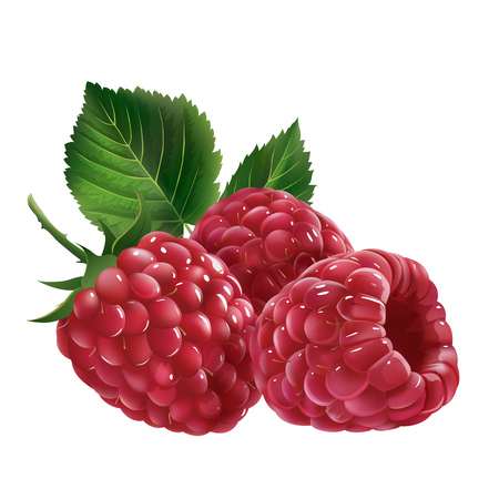 Raspberries with leaves. Isolated illustration on white background. Stock Photo