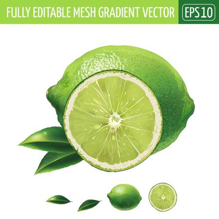 Lime mit Blättern. Isolierte Darstellung auf weißem Hintergrund.