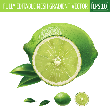 Lime with leaves. Isolated illustration on white background.
