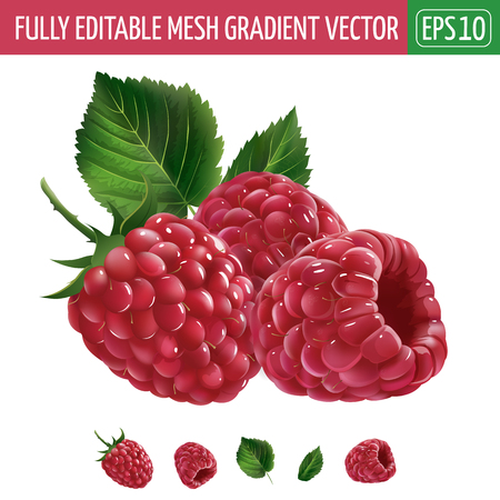 Raspberries with leaves. Isolated illustration on white background.