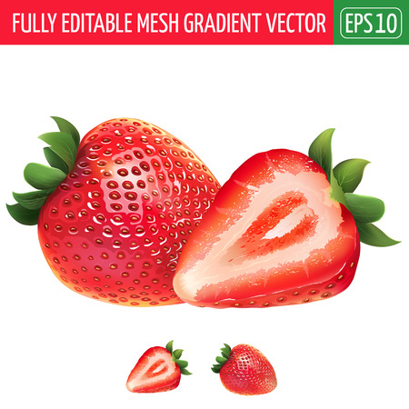segment: Strawberry and his sliced segment. Isolated illustration on white background. Illustration