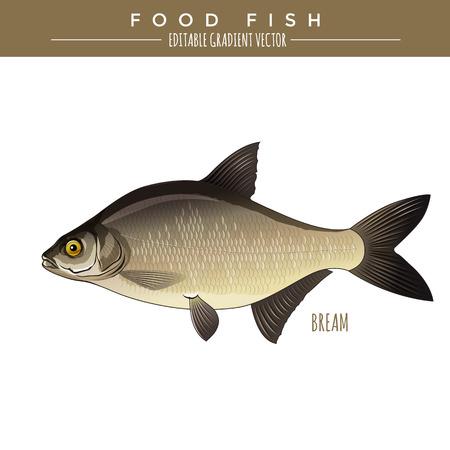 Bream illustration. Food fish, editable gradient vector