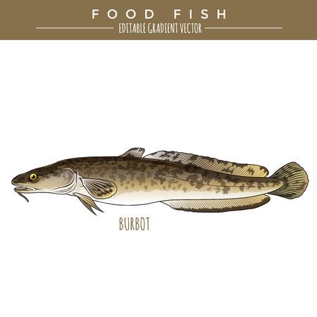 burbot: ilustración Lota. peces marinos, editable vector gradiente Vectores