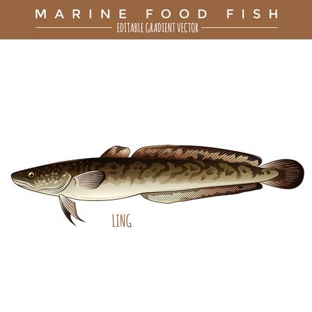 burbot: ilustración Ling. peces marinos, editable vector gradiente Vectores