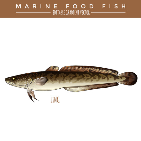 burbot: Ling illustration. Marine food fish, editable gradient vector Vectores