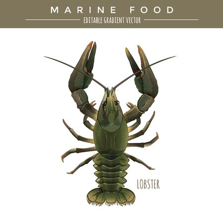 Lobster illustration. Marine food, editable gradient vector