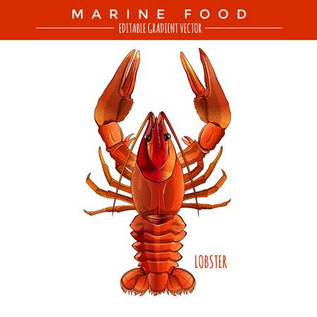 Red Lobster illustration. Marine food, editable gradient vector