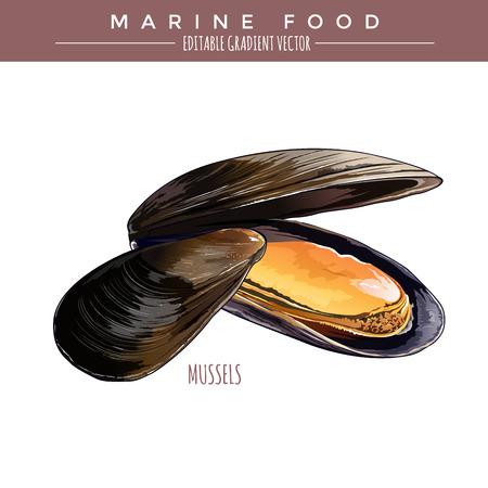 Illustrazione di cozze. Alimento marino, vettore gradiente modificabile