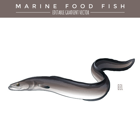 Eel illustration. Marine food fish, editable gradient vector