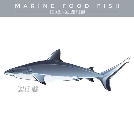 Gray Shark illustration. Marine food fish, editable gradient vector
