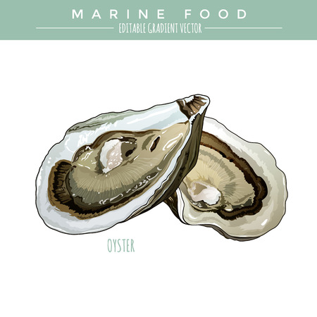 Oyster illustration. Marine food, editable gradient vector