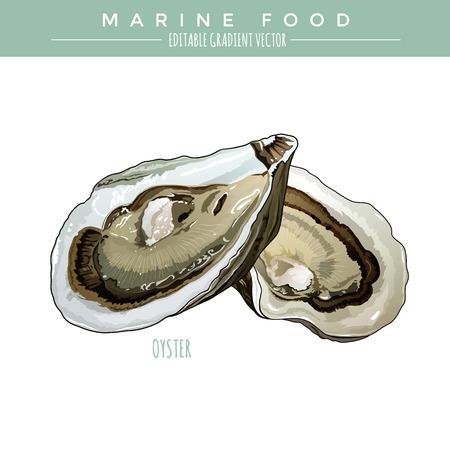 Oyster illustratie. Mariene voedselketen, bewerkbare gradiënt vector Vector Illustratie