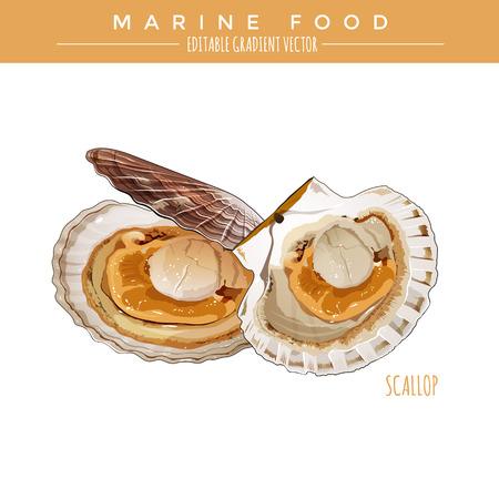 Scallop illustration. Marine food, editable gradient vector