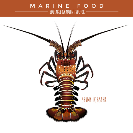 spiny: Spiny lobster illustration. Marine food, editable gradient vector