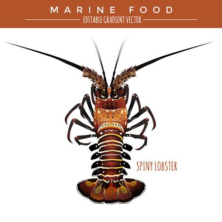 spiny lobster: Spiny lobster illustration. Marine food, editable gradient vector