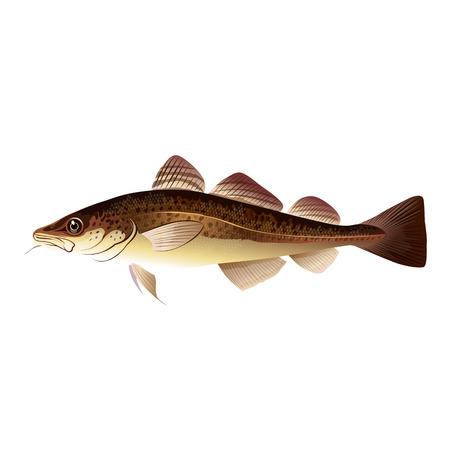 atlantic ocean: Seafood, isolated raster illustration on white background
