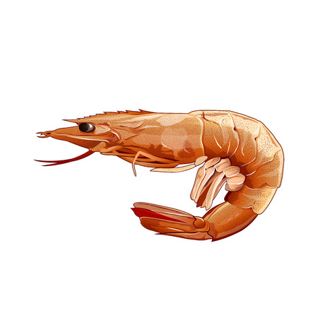 Seafood, isolated raster illustration on white background