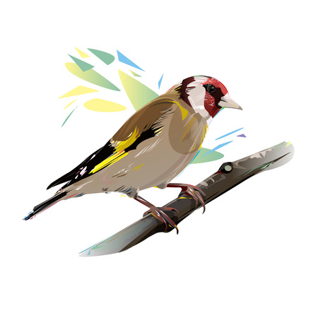 finch: Goldfinch on a branch, isolated illustration Stock Photo