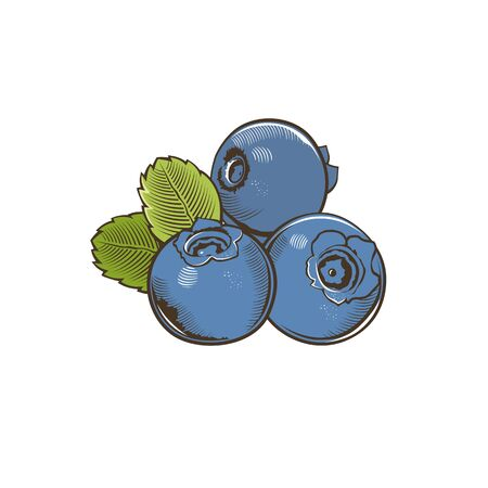 whortleberry: Bilberry in vintage style