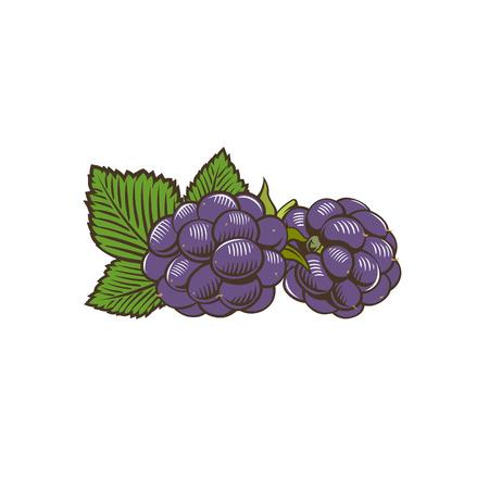 dewberry: Berries in vintage style