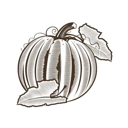 Pumpkin in vintage style