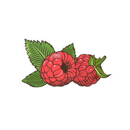 Raspberry in vintage style