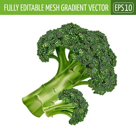 Broccoli on white background. Vector illustration
