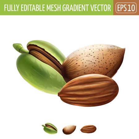 Almond on white background. Vector illustration