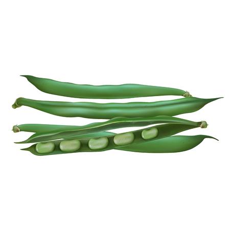 Bean on white background Standard-Bild