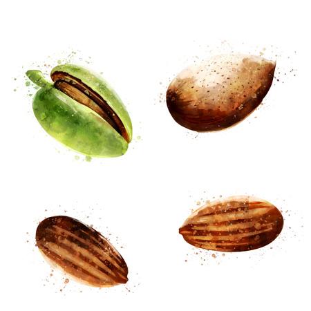 Almond on white background. Watercolor illustration Stock Photo