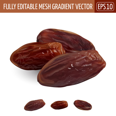 Date fruit, on white background. Vector illustration