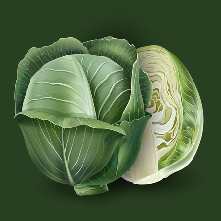 Realistic cabbage on a deep green background.