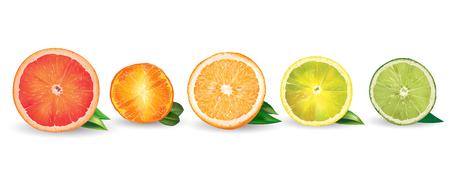 Lemon, orange, citrus, mandarin, grapefruit, lime on a background. Ilustracja