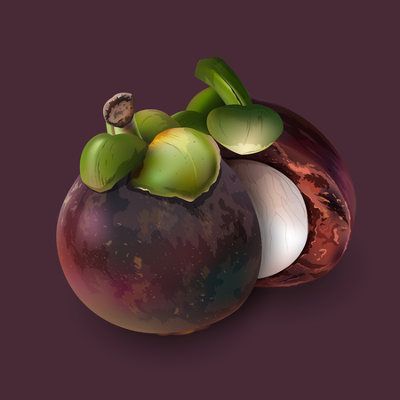 Mangosteen realistic illustration on dark purple background.